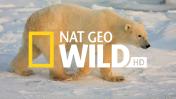 Nat Geo Wild HD