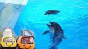 Видео для детей. Машинки Томми и Мэгги  в дельфинарии.