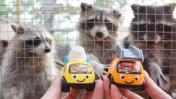 Видео для детей. Машинки Томми и Мэгги в зоопарке.