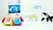 Мультики для детей - Путешествие на  Северный полюс
