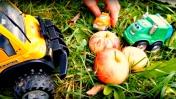 Развивающее видео для детей - Чак и Рауди собирают яблоки