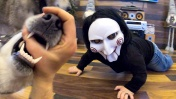 СТРАШНЫЙ ПРАНК НАД СОБАКАМИ / Реакция хаски на ужас из фильма пила / prank over dogs