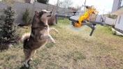 СОБАКА ПРОТИВ НЛО / квадрокоптер dji mavic mini ДНО / чем кормить собаку
