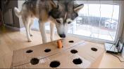 ВЕСЁЛЫЙ ПРАНК над собаками / прикол своими руками для животных