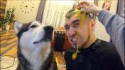 Реакция Собаки на НЕУДАЧНЫЙ ПРАНК над девушкой / ЗАКИДАЛА ЯЙЦАМИ
