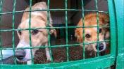 УБИЙСТВО СОБАК В ПРИЮТЕ или СПАСЕНИЕ ? бездомные животные
