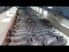 12 Самых Невероятных Археологических Находок