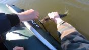 Щука ПОШЛА! Напала от жадности на лодку!
