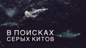 Невероятные СЕРЫЕ КИТЫ и суровое Охотское МОРЕ. Мониторинг Китов на Сахалине. Газпромнефть. NEW VLOG