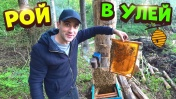 Запустил рой пчел в улей из бревна.Купил маленьких уток в пруд