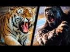 Смотри Вот это БИТВА Животных! КИНГ КОНГ vs ТИГРИЦА Zooba