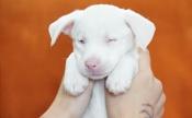Дом для слепого щенка