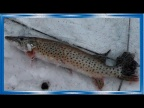 Зимняя рыбалка на хапуги хлопок, лов карася и щуки зимой!