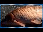 Зимняя рыбалка на Амуре на Хапугу хлопок, складной паук!