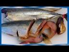 Скумбрия провесная НЕ по  ГОСТУ, это вкуснее, рецепты из рыбы от fisherman dv 27rus
