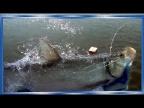 Осенняя путина, 2020, рыбалка сплавными сетями, в ожидании лосося! Кета,