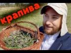 КРАПИВА - самый вкусный майский салат из молодой крапивы