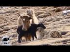 10 Сумасшедших Битв Животных Снятых На Камеру / 3 часть