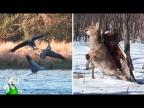 Хищные Птицы в Деле / На Что Способен Ястреб, Орёл, Дятел
