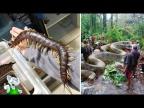 15 Самых Смертоносных Монстров Амазонки