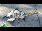 Змея в Деле / Анаконда, Кобра, Питон против Животных