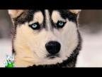 15 Добрейших Пород Собак в Мире
