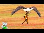 Орел в Деле / Орел против Ястреба, Медведя, Лисы, Рыбы