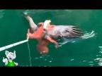 Осьминог в Деле / Осьминог против Акулы, Орла, Мурены