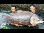 10 Самых Больших Пресноводных Рыб в Мире