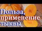Польза тыквы и ее применение в кулинарии