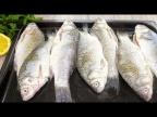 Как я готовлю карасей? Знакомый рыбак подарил РЕЦЕПТ вместе с рыбой! #696
