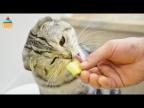 Кот - Гурман! Для любителей кошек!