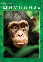 Постер к фильму Шимпанзе 2012