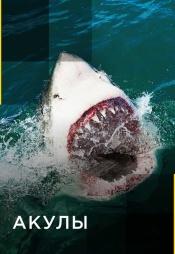 Постер к сериалу Акулы 2017