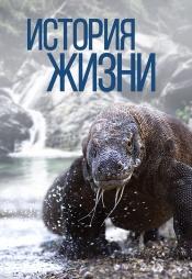 Постер к сериалу История жизни (2012) 2012