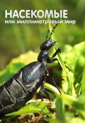 Постер к сериалу Насекомые или миллиметровый мир 2012