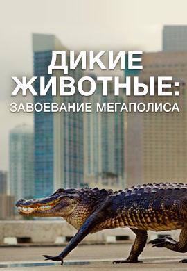 Постер к сезону Дикие животные: завоевание мегаполиса 2018
