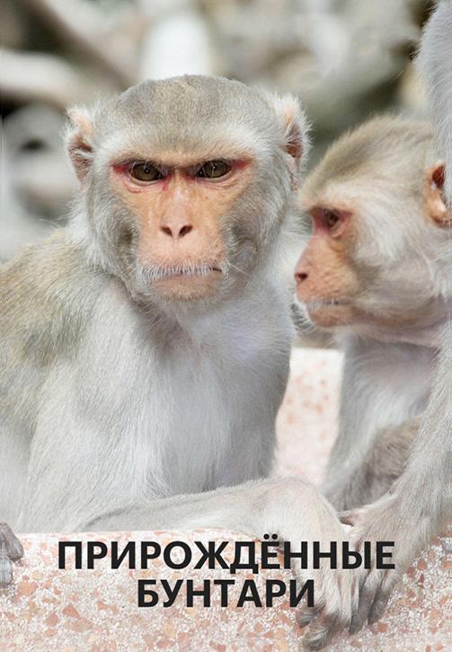 Постер к сериалу Прирожденные бунтари 2018