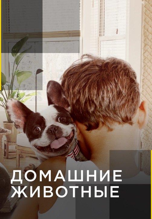 Постер к сериалу Домашние животные. Серия 13 2012