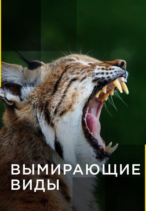 Постер к сериалу Вымирающие виды. Серия 3 2016