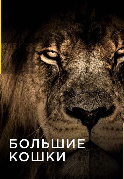 Постер к сериалу Большие кошки 2016