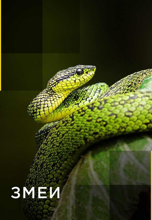 Постер к сериалу Змеи 2017
