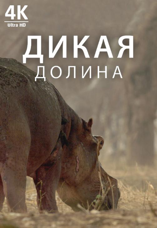 Постер к фильму Дикая долина 4K 2019