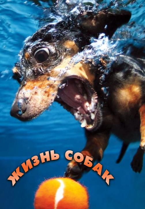 Постер к сериалу Жизнь собак 2016