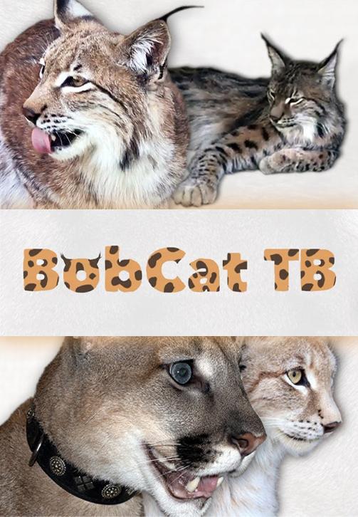 Постер к сериалу BobCat ТВ 2020
